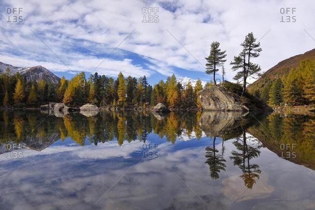 L�rchenwald, Larch Forest on Lake Lago di Saoseo, with Mount Scima da R�giul, Val di Campo, Canton of Grisons, Switzerland, Europe
