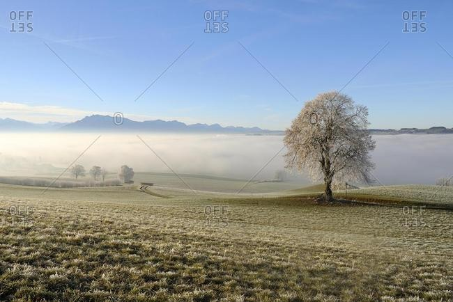 Foggy atmosphere, trees with hoar frost, Seetal valley, Pilatus massif behind, Hohenrain, Canton of Lucerne, Switzerland, Europe