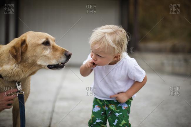 Toddler looking at a dog.