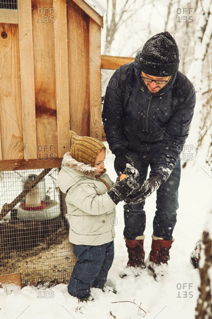 Father and son gathering chicken eggs in the snow