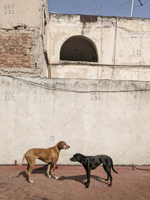 Two dogs standing outside old buildings
