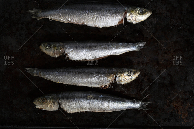 Four raw fish on dark background