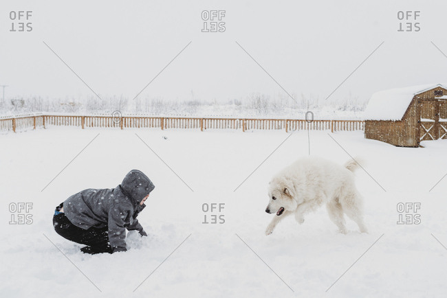 Boy playing in the snow with large white dog