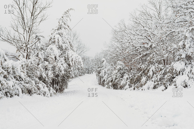 Beautiful fresh snow fall on trees surrounding path