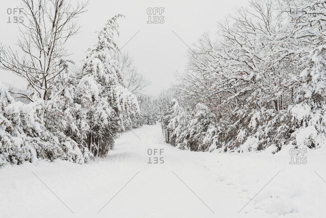 Beautiful fresh snow fall on trees surrounding path