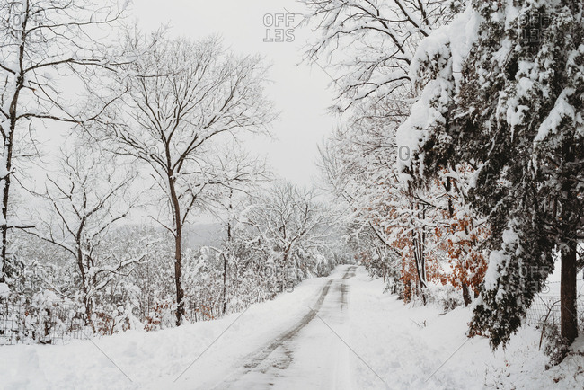 Snow covered trees and road in winter