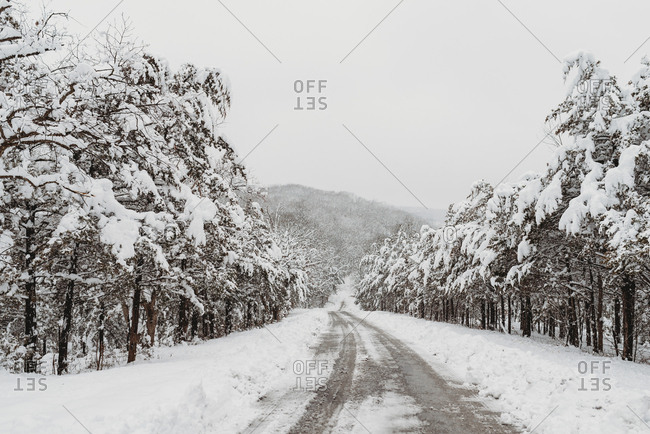 Snowy trees and road in winter