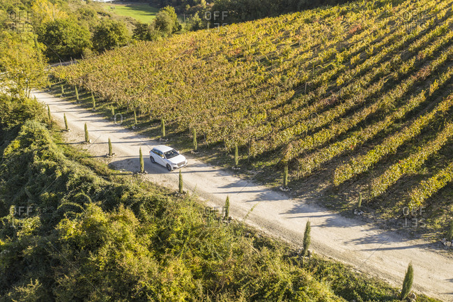 Italy- Tuscany- Siena- car driving on dirt track through a vineyard