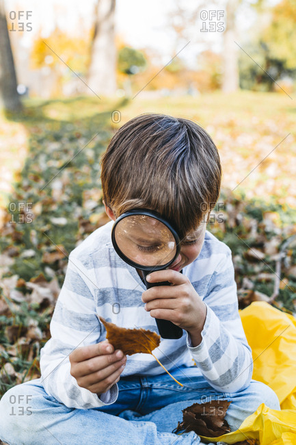 Little boy exploring autumn leaf with magnifying glass in nature