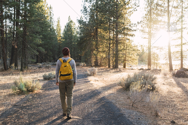 USA- North California- rear view of young man walking on a path in a forest near Lassen Volcanic National Park