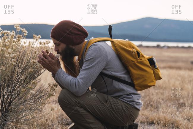 USA- North California- bearded man examining a plant near Lassen Volcanic National Park