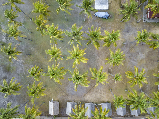 Indonesia- West Sumbawa- Aerial view of Kertasari- huts and palms from above