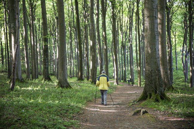 Germany- Mecklenburg-Western Pomerania- Ruegen- Jasmund National Park- hiker in beech forest on hiking trail