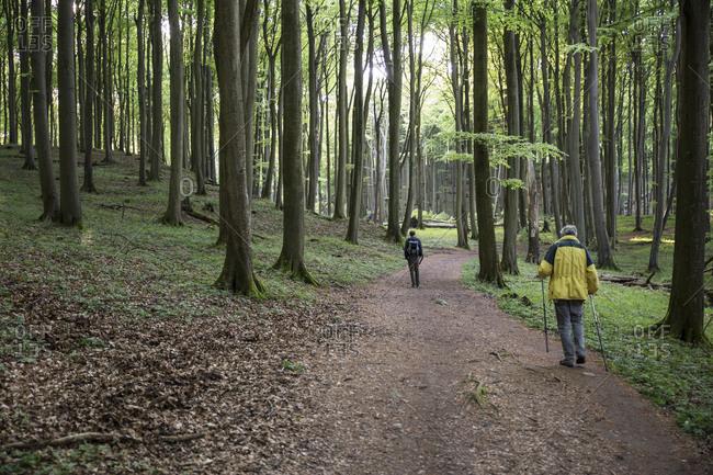 Germany- Mecklenburg-Western Pomerania- Ruegen- Jasmund National Park- hikers in beech forest on hiking trail