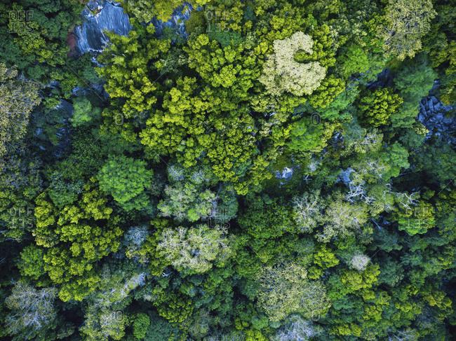 Seychelles- La Digue- Aerial view of rain forest