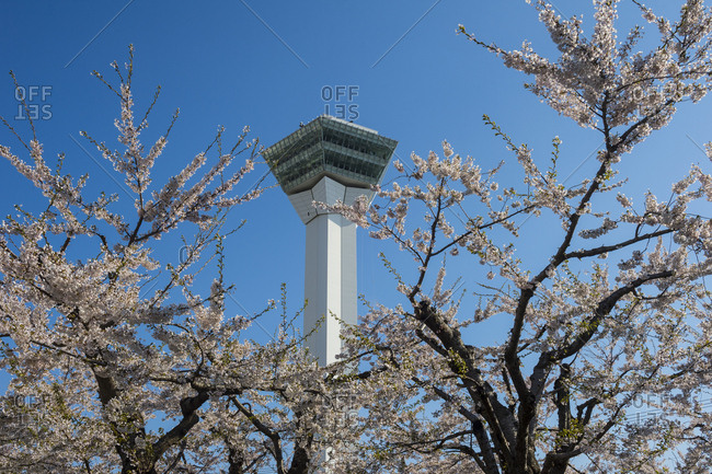 Fort Goryokaku- viewing plattform and the cherry blossom trees