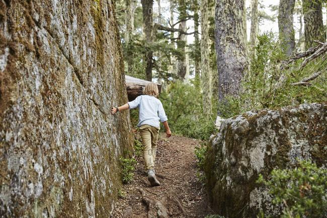 Chile- Puren- Nahuelbuta National Park- boy passing boulder in an Araucaria forest