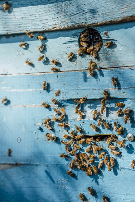 Beehive and honey bees