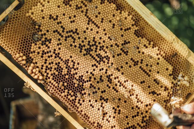 Honeycomb- close-up