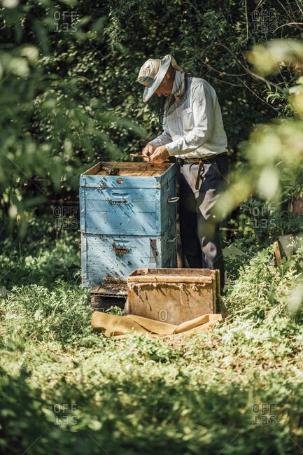 Russland- Beekeeper checking beehive