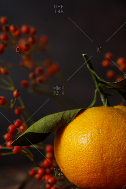 Close up of citrus fruit and holly
