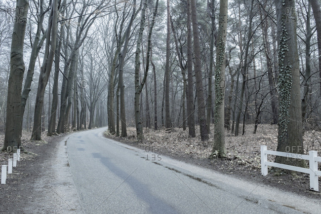 Curving road through forest