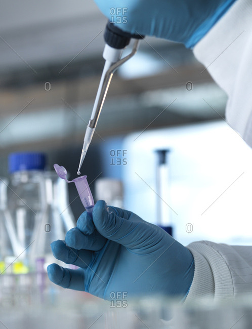 Scientist pipetting a DNA sample into a eppendorf tube for genetic testing in a laboratory