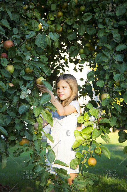 Portrait of smiling little girl picking apple from tree