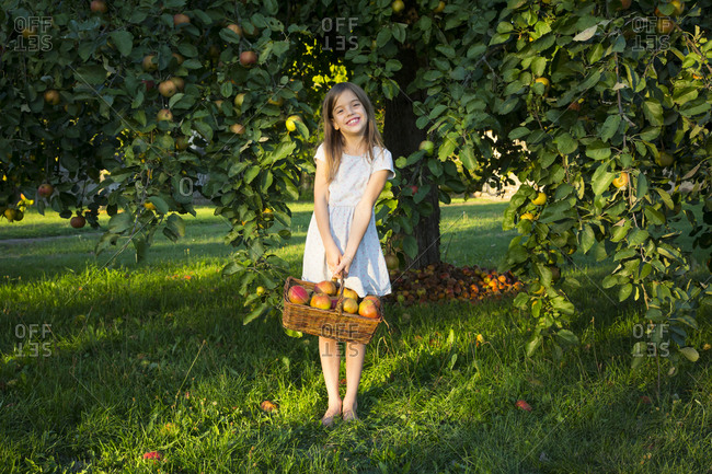 Portrait of smiling little girl with wickerbasket of picked apples standing barefoot on a meadow