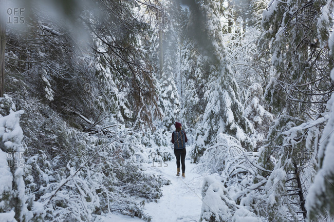 Rear view of woman walking in snowy forest
