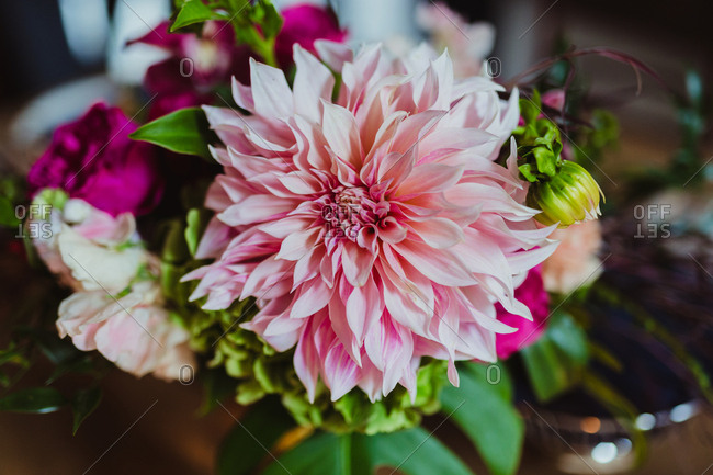 Close-up of pink dahlias in bridal bouquet