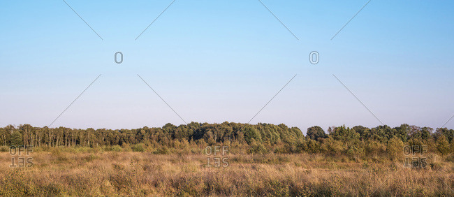 Panoramic view of a field and forest at sunset