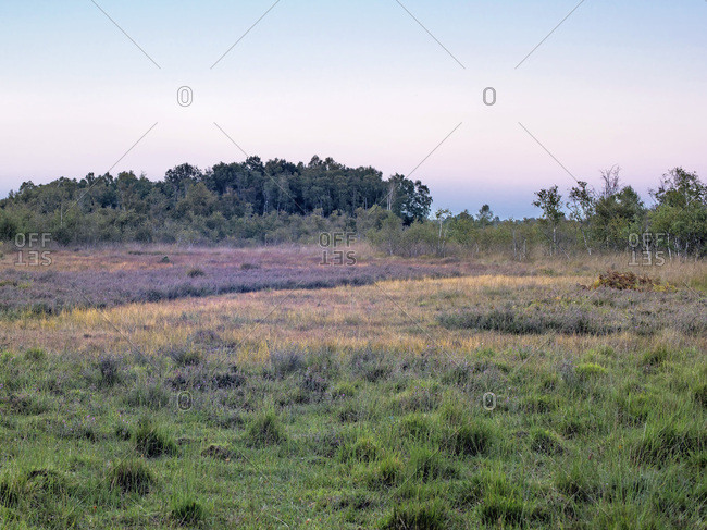 Sunset over field and forest