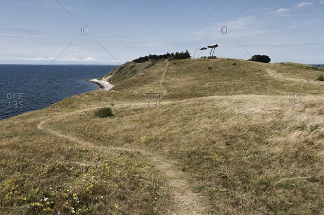 Small path through grass near beach