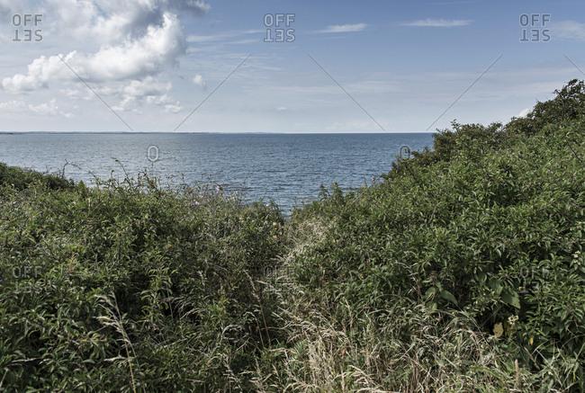 Ocean seen through bushes