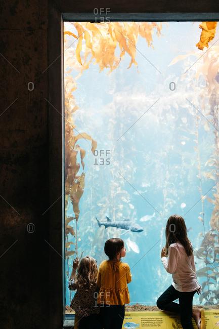 Monterey, California - November 19, 2018: Little girls watching the sharks at the Monterey Bay Aquarium