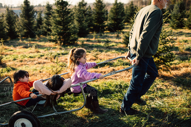 Grandfather pulling kids on a dolly at a tree farm