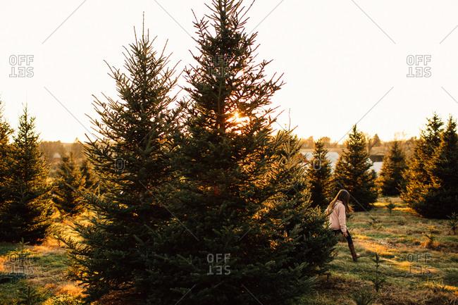 Little girl walking on a tree farm at sunset