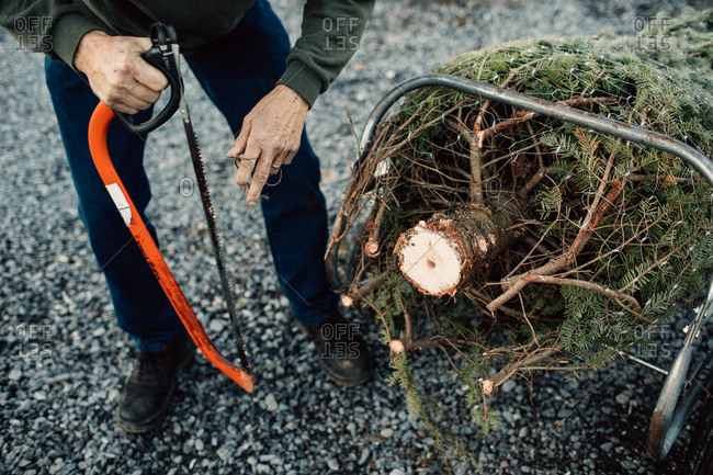 Senior man cutting base of Christmas tree off