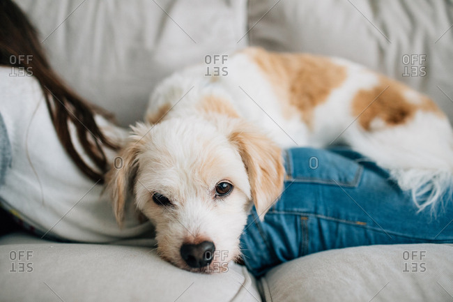 Dog lying on little girl's back