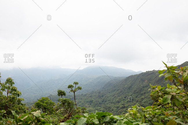 Cloudy sky over dense forest