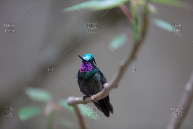 Colorful hummingbird perched on a branch