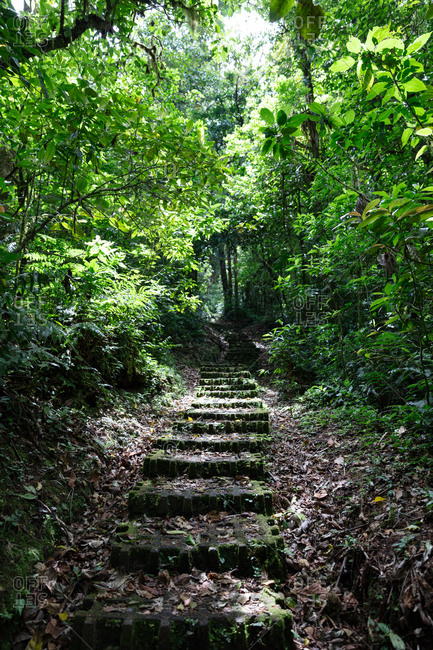 Trail in Monteverde Cloud Forest