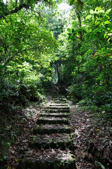 Trail in Monteverde Cloud Forest