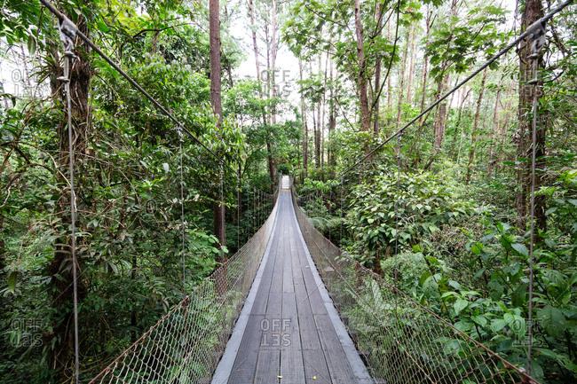 Bridge in the rainforest Costa Rica