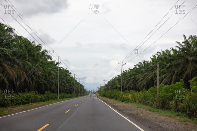 Palm trees along the Carr. Pacifica Fernandez Oreamuno, Costa Rica