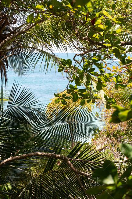 View through tropical palm trees of clear blue ocean