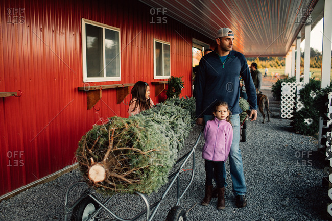 Father and young daughters with a wrapped christmas tree