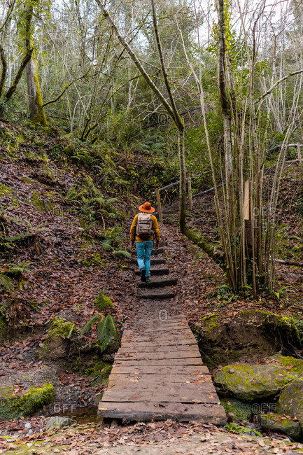 Back view of male with backpack walking up aged stairs in majestic autumn forest in Spain