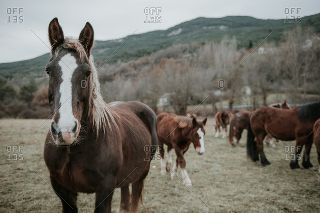 Beautiful horses pasturing on field between trees near hills and cloudy sky in Pyrenees